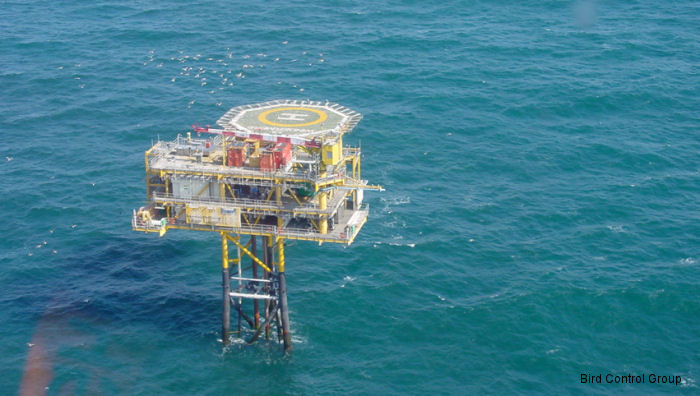 Oil and gas stakeholders collaborate to repel birds from offshore installations and maintain safety